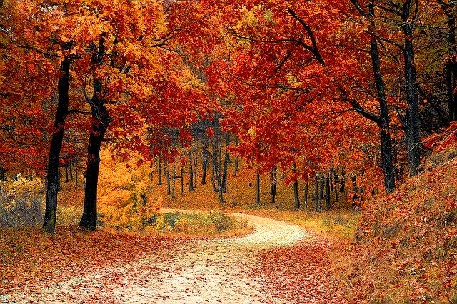 Jak być zdrowy jesienią?
